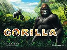 Автомат Gorilla на деньги