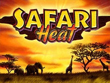Автомат Safari Heat с бонусами